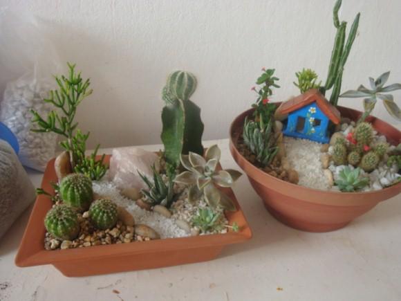 fazer mini jardim flores suculentas para mini jardim mini jardim como