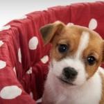 Cama artesanal para animais de estimação