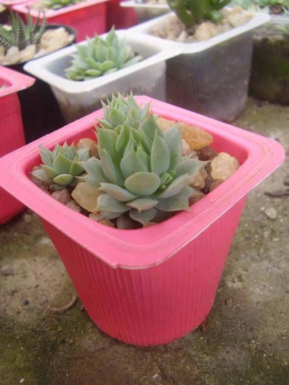Reciclando potes plásticos 011