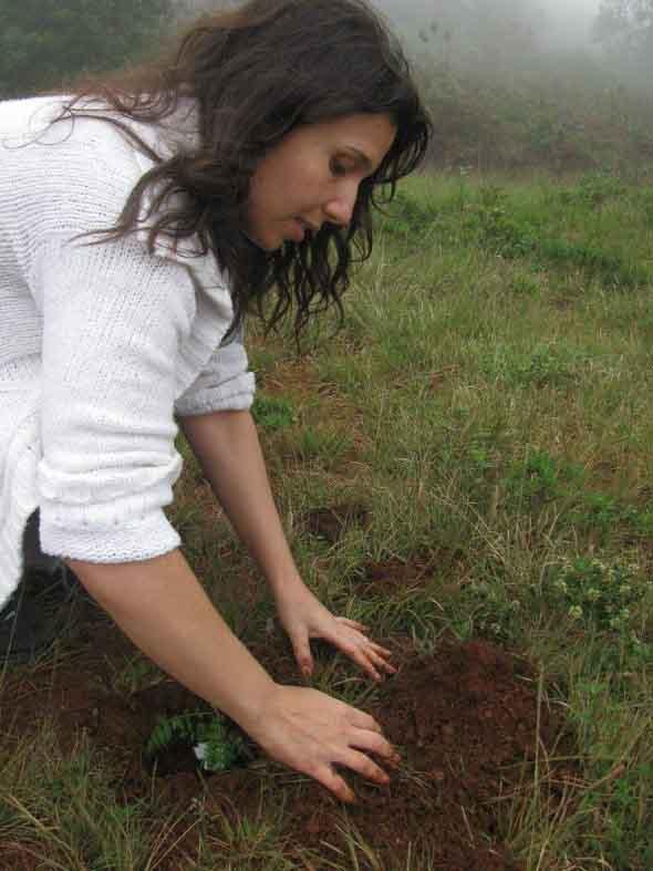 Plante uma árvore 002