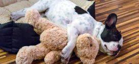 Aprenda a fazer uma cama artesanal para seu cachorrinho