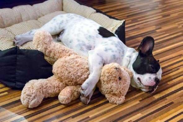Aprenda a fazer uma cama artesanal para seu cachorrinho 004