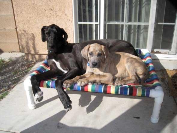 Aprenda a fazer uma cama artesanal para seu cachorrinho 014
