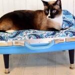 Aprenda a fazer uma cama artesanal para seu gatinho