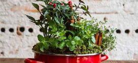 Faça em casa sua hortinha de temperos artesanal