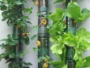 Horta feita com garrafas PET 001