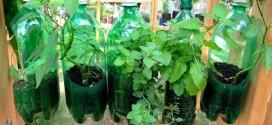 Como fazer uma Horta Vertical com Garrafa Pet Irrigação Automática