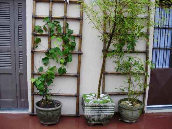 Treliças para enfeitar o jardim 008