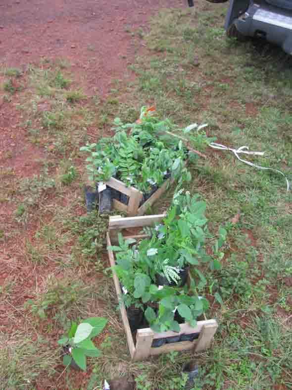 Plante uma árvore 001