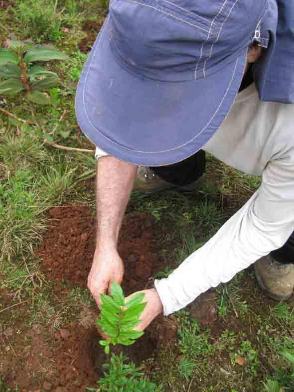 Plante uma árvore 004