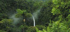 Como montar uma maquete de bioma da Floresta Amazônica
