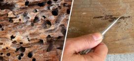 Como eliminar cupins em madeira